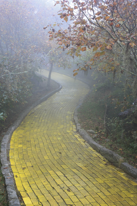 Following that yellow brick road to vaccine injuries…